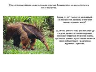 В джунглях водится много разных интересных животных. Большинство из них можно