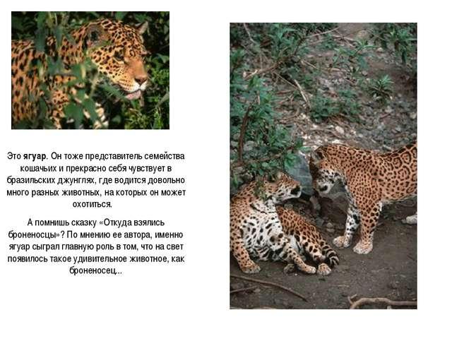 Это ягуар. Он тоже представитель семейства кошачьих и прекрасно себя чувствуе...
