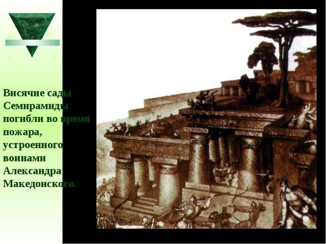 Висячие сады Семирамиды погибли во время пожара, устроенного воинами Александ...