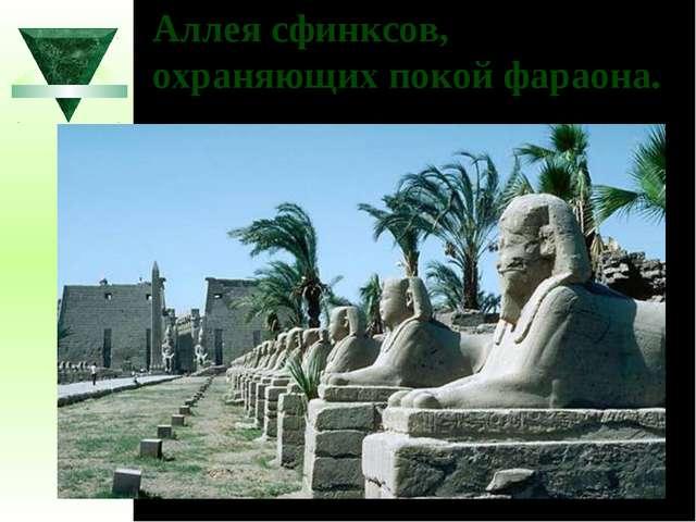 Аллея сфинксов, охраняющих покой фараона.
