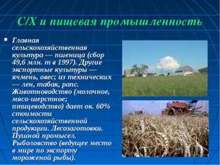 С/Х и пищевая промышленность Главная сельскохозяйственная культура — пшеница