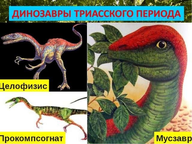 * Целофизис Мусзавр Прокомпсогнат