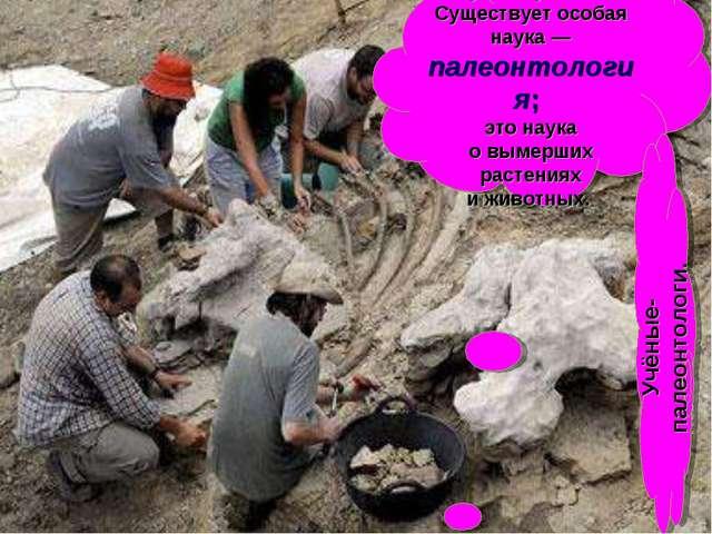 Останки динозавров изучают учёные. Существует особая наука— палеонтология; э...
