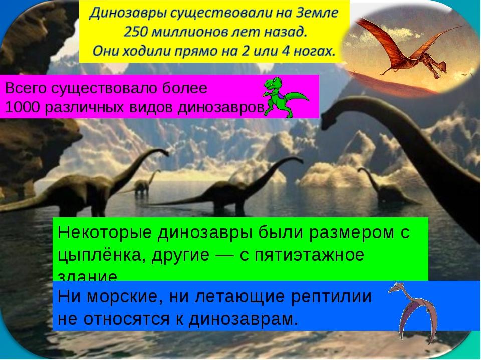 Всего существовало более 1000 различных видов динозавров. Некоторые динозавры...