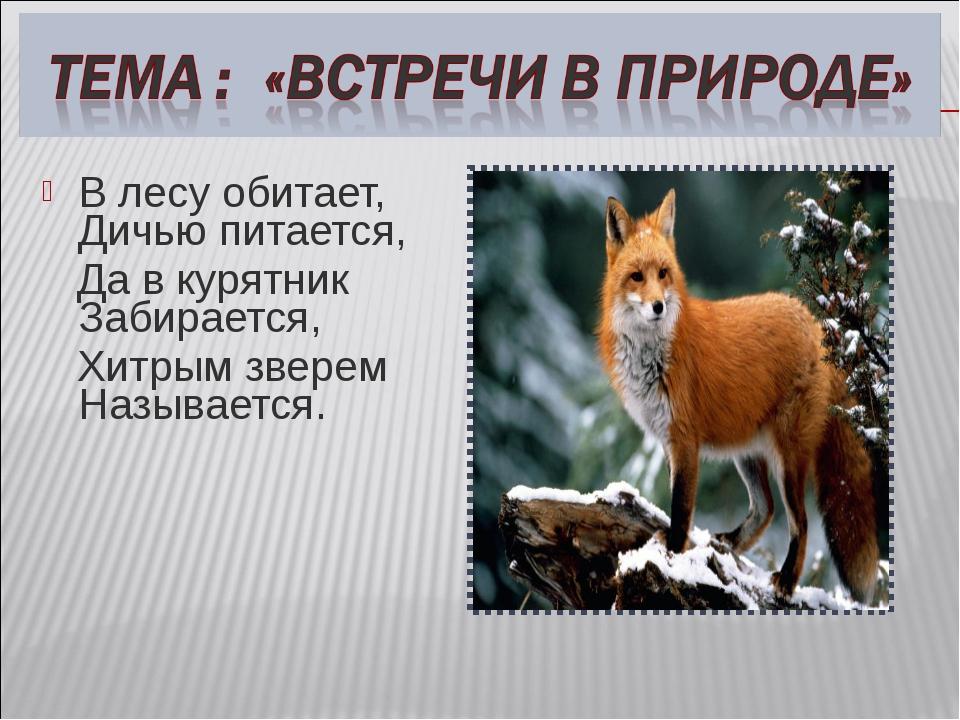 В лесу обитает, Дичью питается, Да в курятник Забирается, Хитрым зверем Назыв...