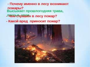 - Почему именно в лесу возникают пожары? Высыхает прошлогодняя трава, листья,
