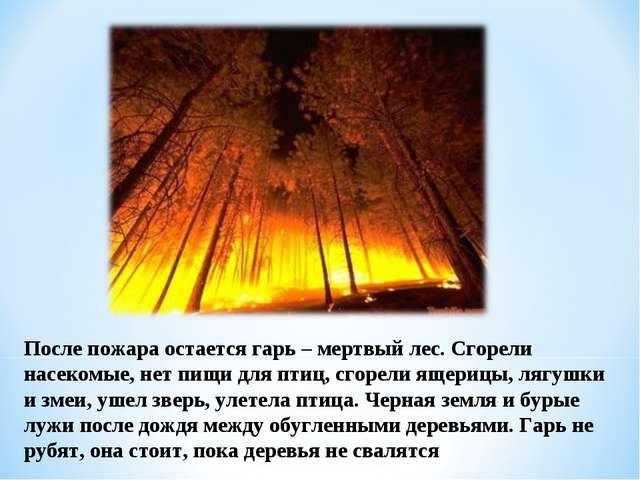 После пожара остается гарь – мертвый лес. Сгорели насекомые, нет пищи для пти...