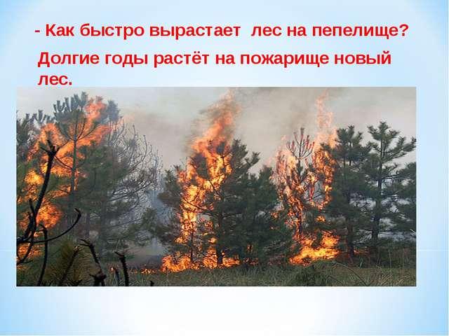 - Как быстро вырастает лес на пепелище? Долгие годы растёт на пожарище новый...