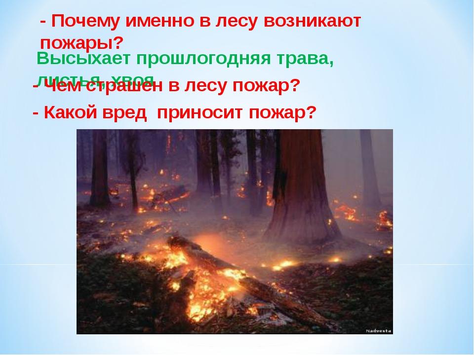 - Почему именно в лесу возникают пожары? Высыхает прошлогодняя трава, листья,...