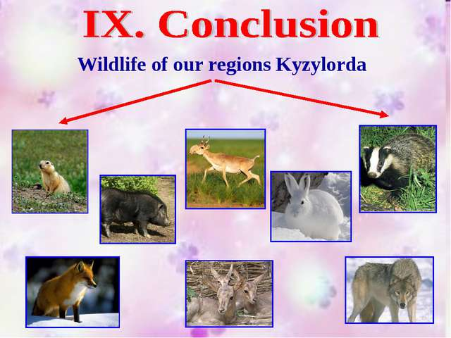 Wildlife of our regions Kyzylorda