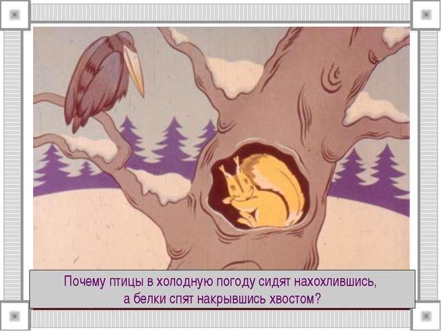 Почему птицы в холодную погоду сидят нахохлившись, а белки спят накрывшись хв...