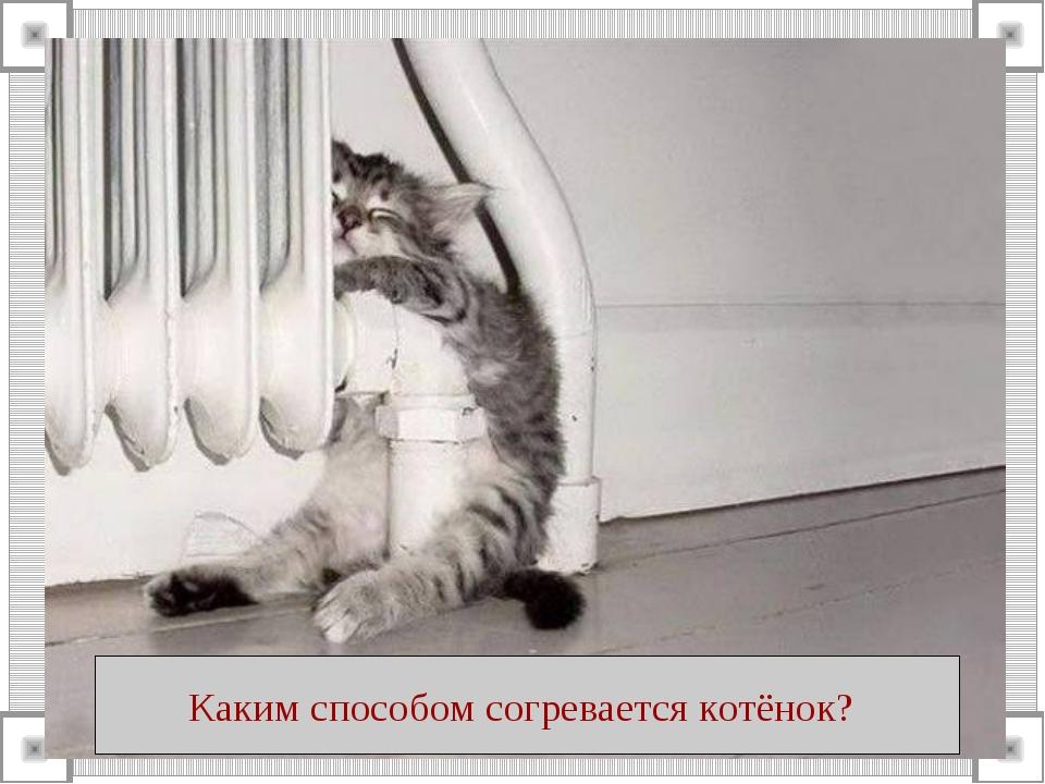 Каким способом согревается котёнок?