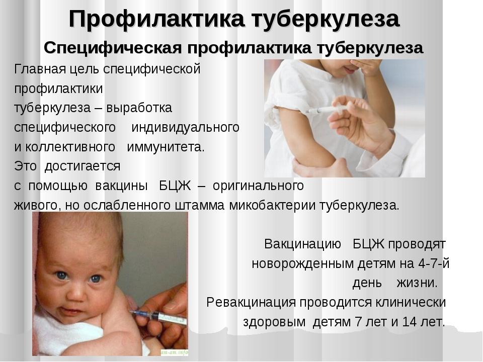 Профилактика туберкулеза Специфическая профилактика туберкулеза Главная цель...