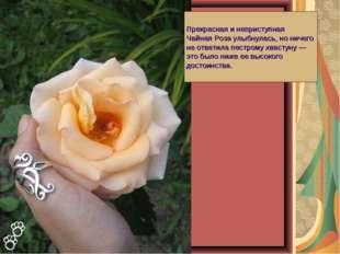 Прекрасная и неприступная Чайная Роза улыбнулась, но ничего не ответила пестр
