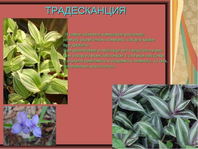 ТРАДЕСКАНЦИЯ Я самое обычное комнатное растение, но могу значительно понизить...