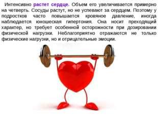 Интенсивно растет сердце. Объем его увеличивается примерно на четверть. Сосуд