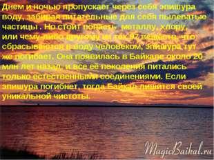 * Днем и ночью пропускает через себя эпишура воду, забирая питательные для се