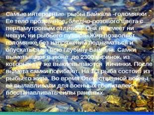* Самые интересные рыбы Байкала -голомянки . Ее тело прозрачное, бледно-розов