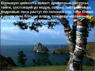 * Большую ценность имеют древесные ресурсы тайги, состоящей из кедра, сосны,