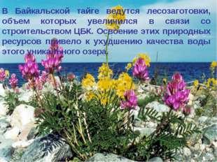 * В Байкальской тайге ведутся лесозаготовки, объем которых увеличился в связи