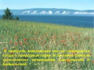 * В наиболее живописных местах планируется создать природные парки. В бассейн