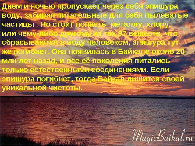 * Днем и ночью пропускает через себя эпишура воду, забирая питательные для се...