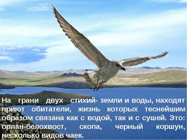 * На грани двух стихий- земли и воды, находят приют обитатели, жизнь которых...