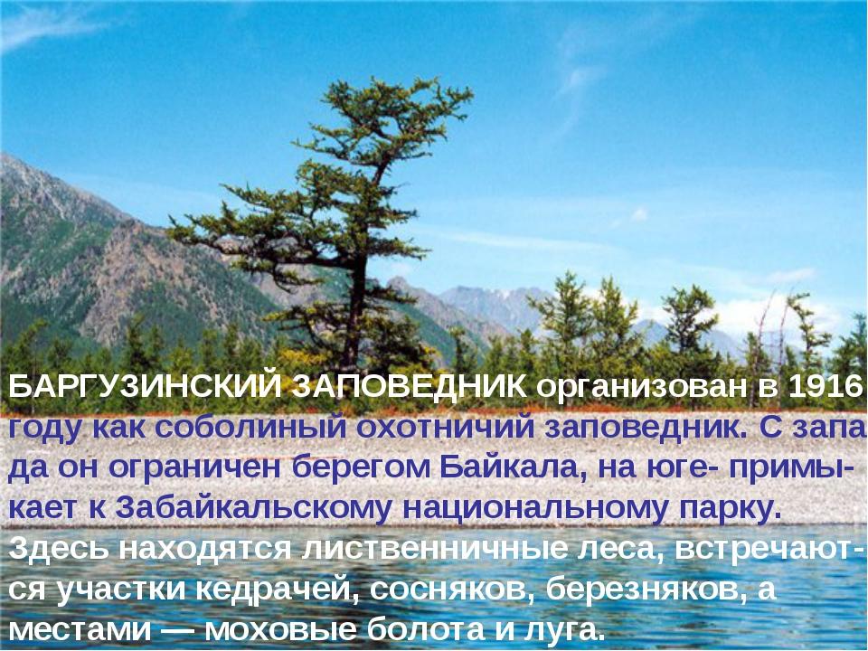 * БАРГУЗИНСКИЙ ЗАПОВЕДНИК организован в 1916 году как соболиный охотничий зап...