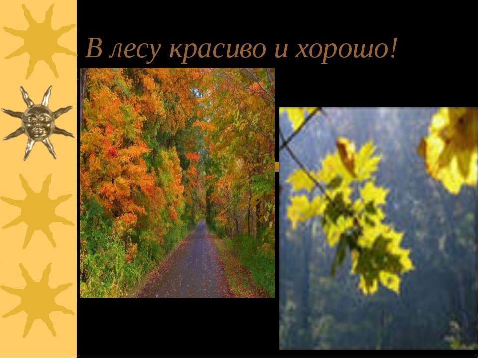 В лесу красиво и хорошо!
