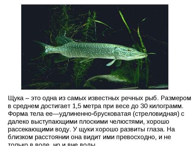 Щука – это одна из самых известных речных рыб. Размером в среднем достигает 1...