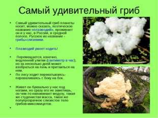 Самый удивительный гриб Самый удивительный гриб планеты носит, можно сказать,