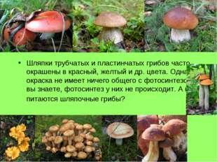 Шляпки трубчатых и пластинчатых грибов часто окрашены в красный, желтый и др.