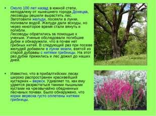 Около 100 лет назад в южной степи, неподалеку от нынешнего города Донецка, ле