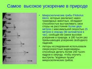 Самое высокое ускорение в природе Микроскопические грибы Pilobolus kleinii, к