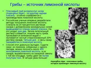Грибы – источник лимонной кислоты Плесневый гриб аспергиллус нигер (Aspergill