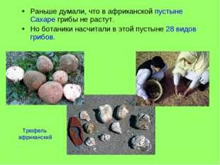 Раньше думали, что в африканской пустыне Сахаре грибы не растут. Но ботаники