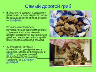 Самый дорогой гриб В Италии, Франции, Хорватии и даже у нас в России растет о