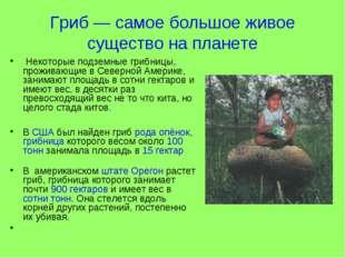 Гриб — самое большое живое существо на планете Некоторые подземные грибницы,