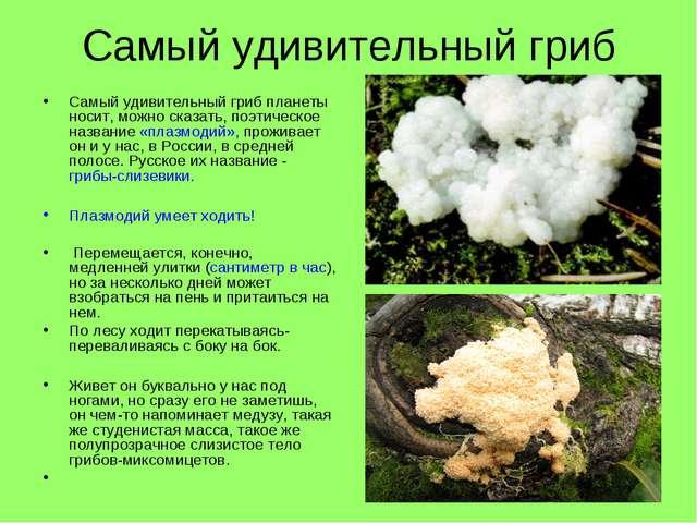 Самый удивительный гриб Самый удивительный гриб планеты носит, можно сказать,...