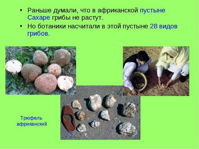 Раньше думали, что в африканской пустыне Сахаре грибы не растут. Но ботаники...