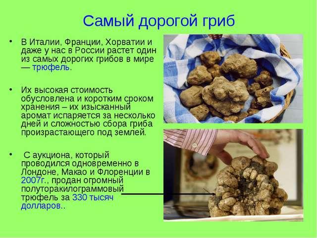 Самый дорогой гриб В Италии, Франции, Хорватии и даже у нас в России растет о...