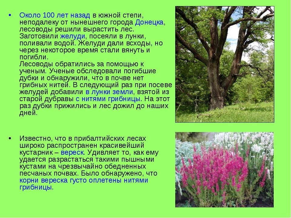 Около 100 лет назад в южной степи, неподалеку от нынешнего города Донецка, ле...