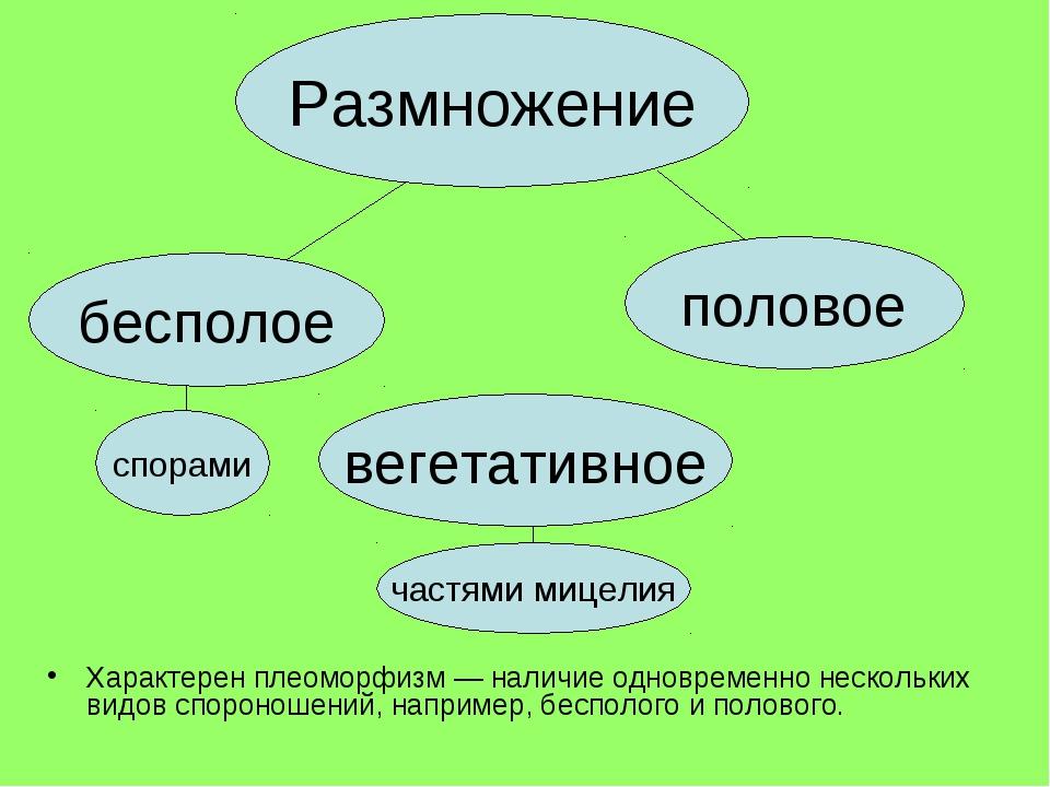 Характерен плеоморфизм — наличие одновременно нескольких видов спороношений,...