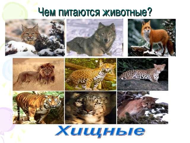 Чем питаются животные?
