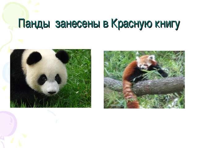 Панды занесены в Красную книгу