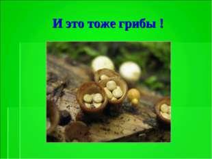 И это тоже грибы !