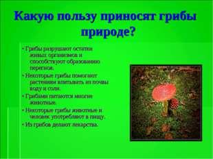 Какую пользу приносят грибы природе? • Грибы разрушают остатки живых организм
