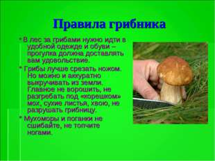 Правила грибника * В лес за грибами нужно идти в удобной одежде и обуви – про