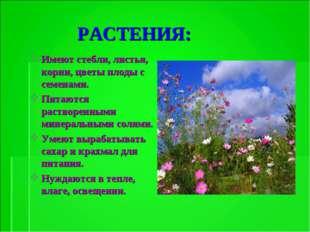 РАСТЕНИЯ: Имеют стебли, листья, корни, цветы плоды с семенами. Питаются раст
