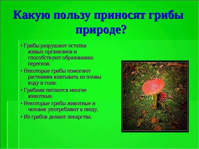 Какую пользу приносят грибы природе? • Грибы разрушают остатки живых организм...